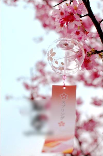 pink sakura japanese wind chime