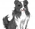 Doge | July 2012